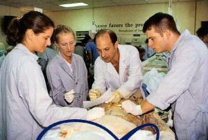 cadaver dissection