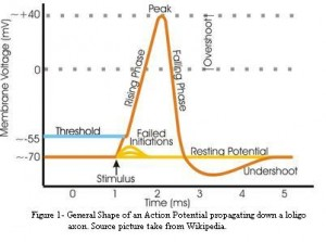 requirements for PA school: action potential