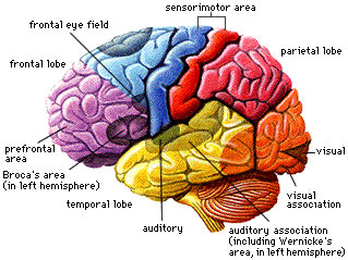 physician assistant specialty that involves the brain