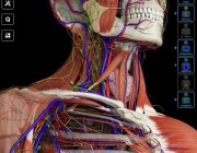 The Must-Have Anatomy Smartphone App